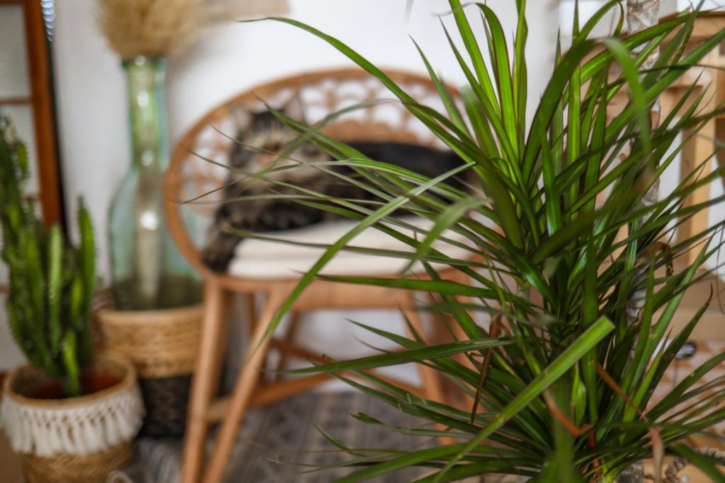 Quelles plantes pour dépolluer son intérieur et améliorer la qualité de l'air ?